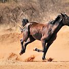 """THIS IS """"BRONCO""""  by Magriet Meintjes"""