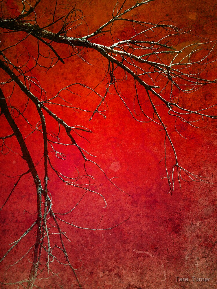 Red Morning by Tara  Turner