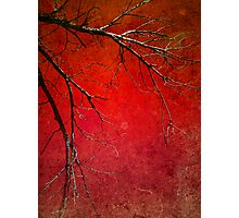 Red Morning Photographic Print
