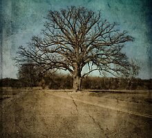 Largest Oak in Missouri by Kristen Coleman