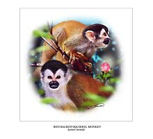 RED-BACKED SQUIRREL MONKEY 3 Photographic Print