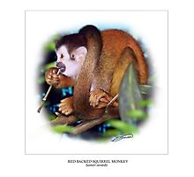 RED-BACKED SQUIRREL MONKEY 5 Photographic Print