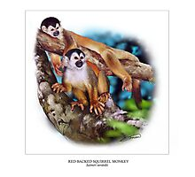 RED-BACKED SQUIRREL MONKEY 6 Photographic Print