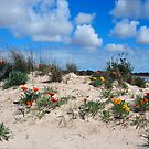 Spring  Dunes Bouquet by HG. QualityPhotography