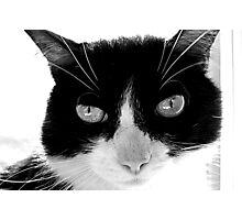Black and White Kitty Photographic Print
