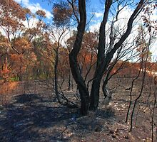 Bushfire Aftermath by Barbara Harris
