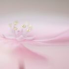 Soft on Pink by Jacky Parker