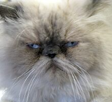 Ho Bo-- What A Frown!!! by Linda Miller Gesualdo