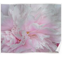 LOVELY PINK PEONY Poster