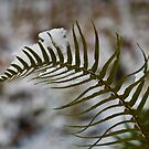 Winter Fern by David Friederich