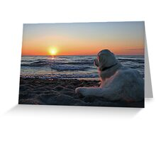 Enjoying the sunset (Denmark) Greeting Card