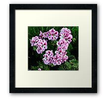 Wreath of Pink Geraniums Framed Print