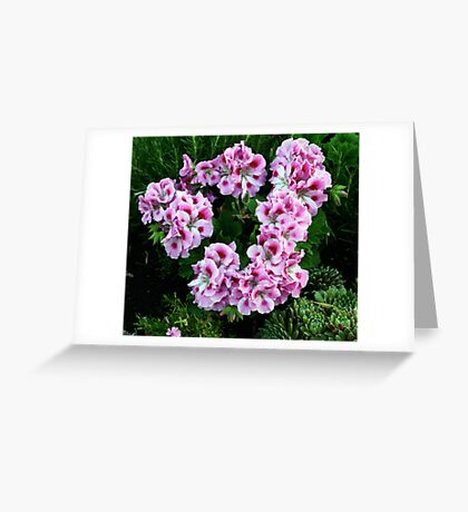 Wreath of Pink Geraniums Greeting Card