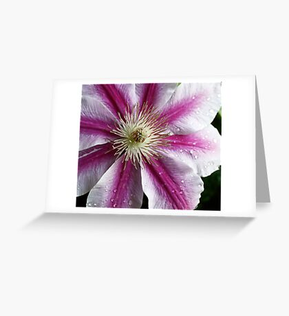 A Burst of Pink Clematis Greeting Card