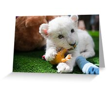Adorable White Lion Cub Greeting Card