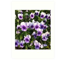 Spring Time Pansies Art Print