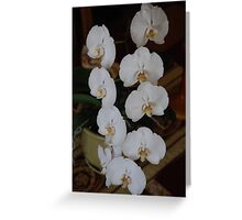 White Orchid 2 Center Piece Greeting Card