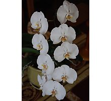 White Orchid 2 Center Piece Photographic Print