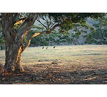 The Field - Kangaroo Island  Photographic Print