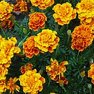 Fall Marigolds by Bea Godbee