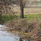 Reflected tree by evilcat