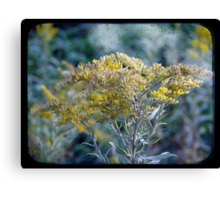 Autumn Hues TTV Canvas Print