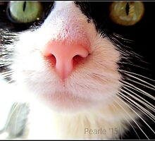 Kitty Nose by Pearle