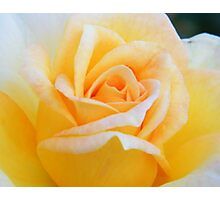 A Rose For A Special Lady Who Was Once Daddy's Girl Photographic Print
