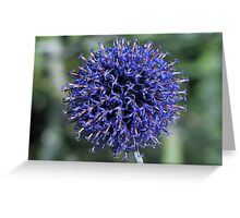 Purple.......or is that blue?? Greeting Card