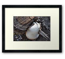 Marshmallow anyone? Framed Print
