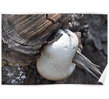 Marshmallow anyone? Poster