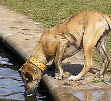 Aw Doggone it! Large hungry Pup looking for a feed. Qld. Oz/ by Rita Blom