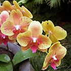 Exotic Orchids  by LuvlyGrafix