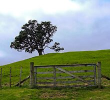 The Lone Fence by Kamalpreet S. Sawhney