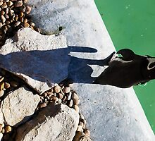 Penguin Shadow by Nigel Bangert