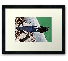 Penguin Shadow Framed Print