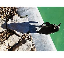 Penguin Shadow Photographic Print