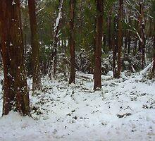 Snow in the woods by Kamalpreet S. Sawhney
