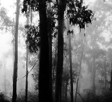 A misty morning by Kamalpreet S. Sawhney