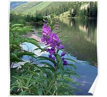 Fireweed Beauty Poster
