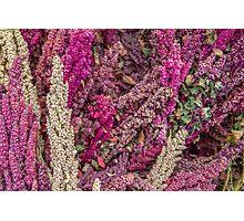Quinoa Photographic Print