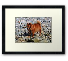 'More Damn Rocks...' Framed Print