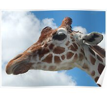 Giraffe with Clouds Poster