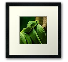 ~Coiled~ Framed Print