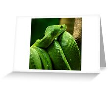 ~Coiled~ Greeting Card