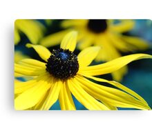 Sunshine on the weekend! Canvas Print