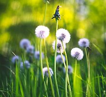 Dandy Family by ghd-photography