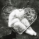 heart of glass by Clare Colins