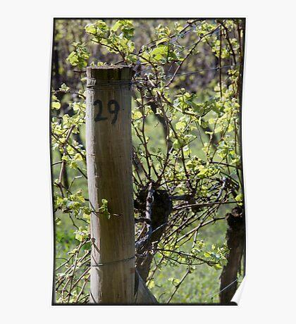 Row 29 - Pinot Noir Poster