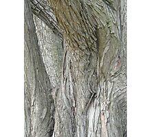 Tree Texture  Photographic Print